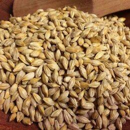 Семена - Продам семена ячмень яровой - сорт ПРОМЕТЕЙ, 0