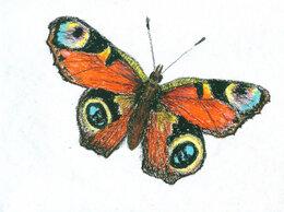 """Картины, постеры, гобелены, панно - Рисунок """"Бабочка"""" картина масляная пастель…, 0"""