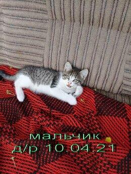 Кошки - Отдам в добрые руки котят, 0