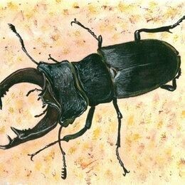 """Картины, постеры, гобелены, панно - Картина """"Жук-олень"""" рисунок гуашь акварель бумага 29,7х21 см Гаврилин Е.Г., 0"""