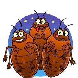 Бытовые услуги - Дезинфекция насекомых, 0
