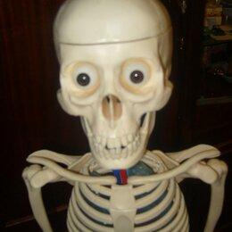 Развивающие игрушки - Модель скелета человека 110 см, 0