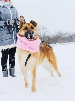 Собаки - Собака друг в дар из приюта, в добрые руки, 0