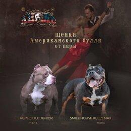 Собаки - Щенки американского булли , 0
