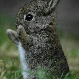 Грызуны - Продам кроликов, 0