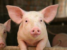 Сельскохозяйственные животные - С\Х Животные, 0