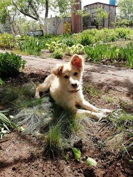 Собаки - Ищу дом для щенка, 0