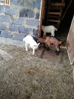 Сельскохозяйственные животные - Козочка и козлики, 0
