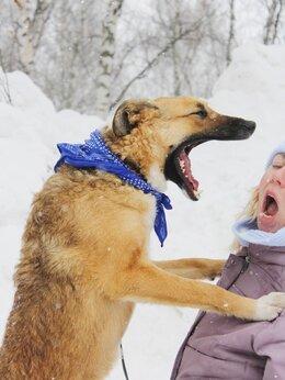 Собаки - Молодая и активная собака пропадает в приюте, в…, 0
