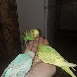 Птицы - Попугай говорящий, 0