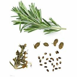 Семена - Семена розмарина (50 шт.), 0