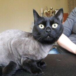 Услуги для животных - Стрижка кошек, 0