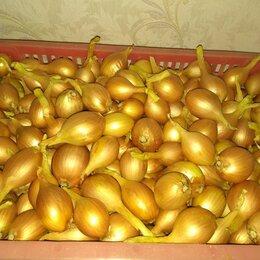 Лук-севок, семенной картофель, чеснок - лук репка, 0