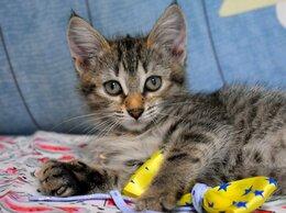 Кошки - Котёнок Шпулька 3месяца в добрые руки , 0