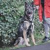 Небольшая собачка ищет дом  по цене даром - Собаки, фото 7