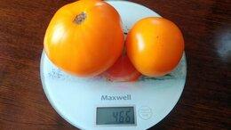 Семена - Семена томатов собственного сбора на любой вкус,…, 0