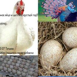 Птицы - Инкубационное яйцо (импорт и Россия), 0