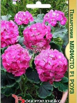 Рассада, саженцы, кустарники, деревья - Пеларгония коричневолистная Мефисто F1 Роуз…, 0