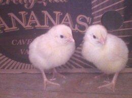 Птицы - Муларды,цыплята бройлеры и кур несушек, 0