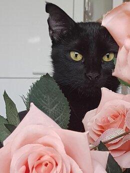 Кошки - Жду маму))), 0