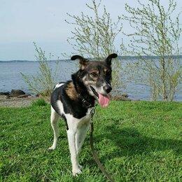 Собаки - Срочно Тимур ищет дом , 0