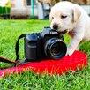 Продам щенков породы лаблодор  по цене 20000₽ - Собаки, фото 1