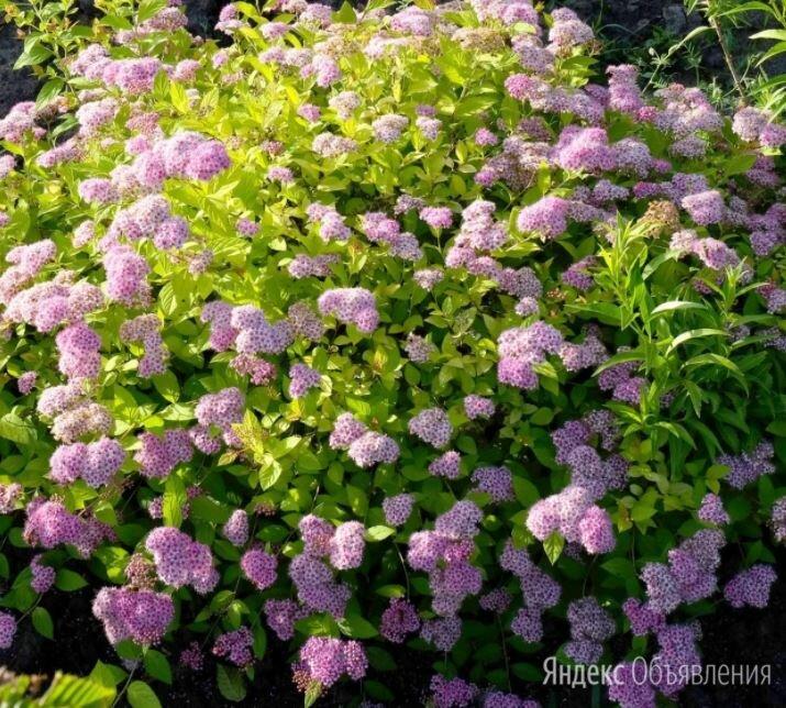 лункорез для огорода купить в москве
