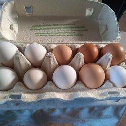 Продукты - Яйца домашних кур., 0