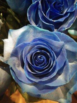 Цветы, букеты, композиции - Букет из 5 голубых роз! , 0