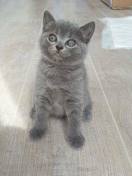 Кошки - Отдам бесплатно котиков, 0