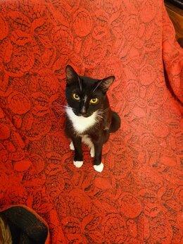 Кошки - Красота в добрые, ответственные руки, 0