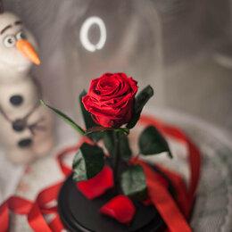 Комнатные растения - Роза в колбе/ Вечная роза , 0