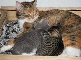 Кошки - Чудесные кошечки в добрые руки, 0