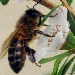 Ароматерапия - Прополис пчелиный., 0