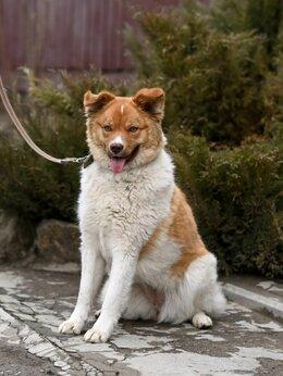 Собаки - Маленькая собачка Алиса в поиске дома! , 0