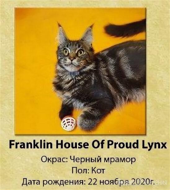Котята Мейн-Кун по цене 25000₽ - Кошки, фото 0