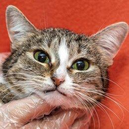 Кошки - Аня - кошка-маска в добрые руки, 0