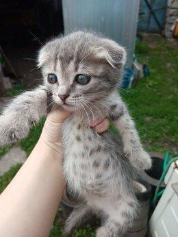 Кошки - СРОЧНО!!!!! Отдам котят даром помесь русской…, 0