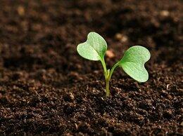 Удобрения - Грунт,Чернозем,торф, садовая земля - цена за куб…, 0