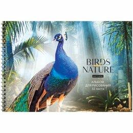Рисование - Альбом для рисования 32 л. на гребне ArtSpace «Животные. Birds and nature», 0