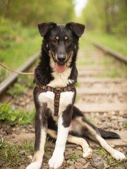 Собаки - Подросток Найт ищет мампап, 0