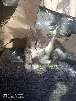 Кошки - Отдам котенка девочку в добрые руки, 0