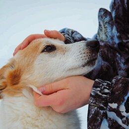 Собаки - Маленькая спокойная собачка ищет дом , 0