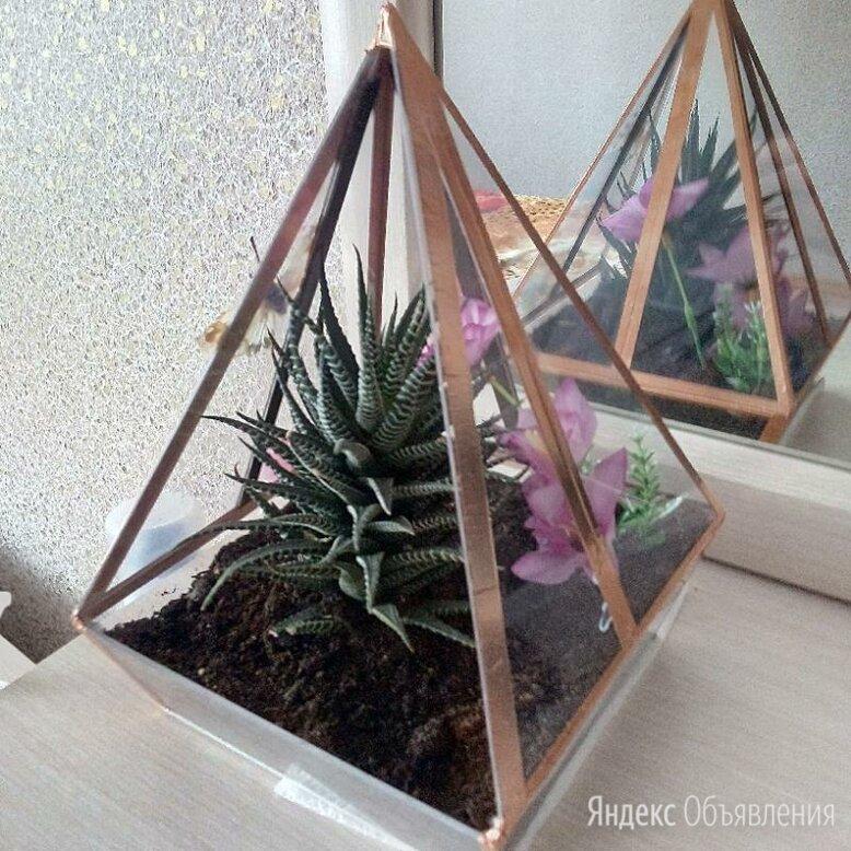 Флорариум по цене 1000₽ - Цветы, букеты, композиции, фото 0