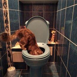 Услуги для животных -  Котенок  и туалет , 0