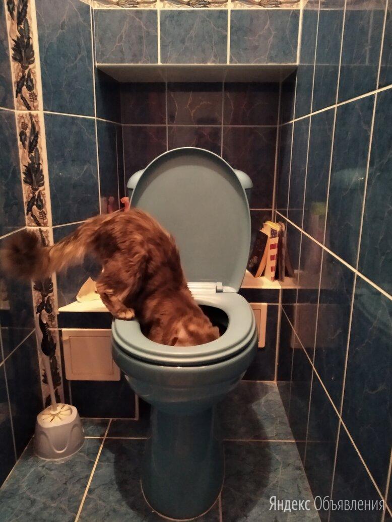 Котенок  и туалет  по цене 500₽ - Услуги для животных, фото 0