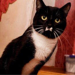 Кошки - Котик с необычной судьбой ищет своего человека!, 0