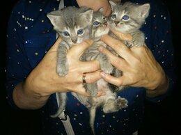 Кошки - В добрые руки. , 0