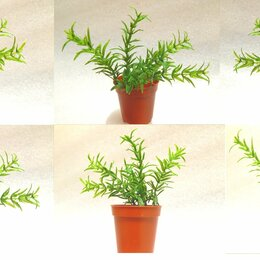 Растения для аквариумов и террариумов - Цена за 3шт. Искусственные аквариум растения, 0