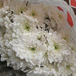 Цветы, букеты, композиции - Хризантема белая Пина колада кустовая срезка, 0